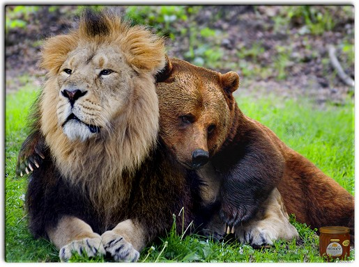 I životinje vole.....zar ne? - Page 2 Romance-i-love-you-dear-lion-and-bear